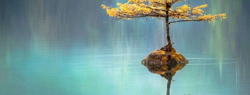 Baum auf kleiner Insel im See - Yoga & Pilates in München